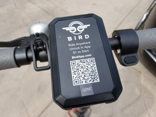 Review: Which is better? Lime or Bird Electric Scooters
