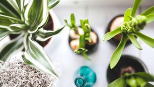 Como Deve Ser o Ambiente do Seu Home Office?