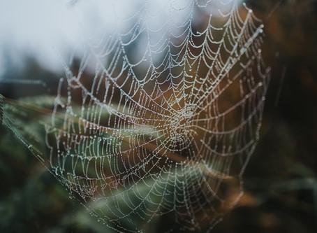 How do you know if you have Arachnophobia?
