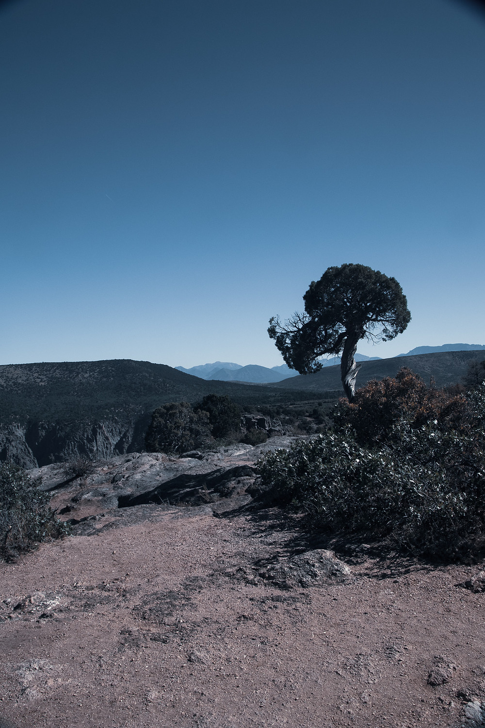 I often think about all the changes my grandfather experienced. He was born in 1891 so you can imagine the changes he would have seen. But then I see this tree standing near the edge of a cliff in Black Canyon of the Gunnison and have to really wonder about all the things it has been witness to.
