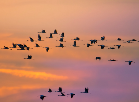 A Short Flight Into the World of Migration