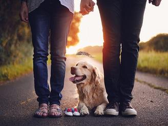 Вашата бременост и претпазливоста од домашниот миленик