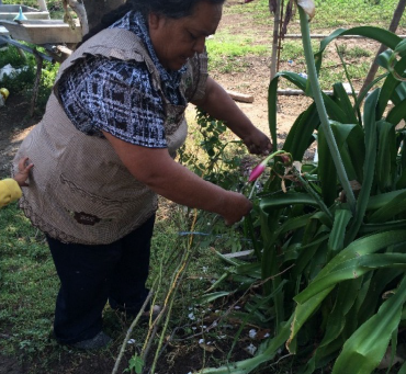 Ethnobotanical knowledge of women in family gardens