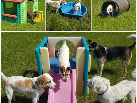 The Importance of Canine Enrichment