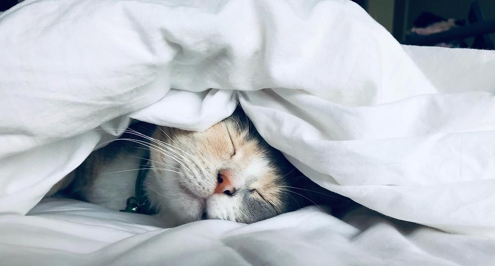 Yoga helps you sleep deeply...