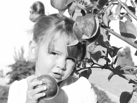 Le pommier, les pommes et les enfants.