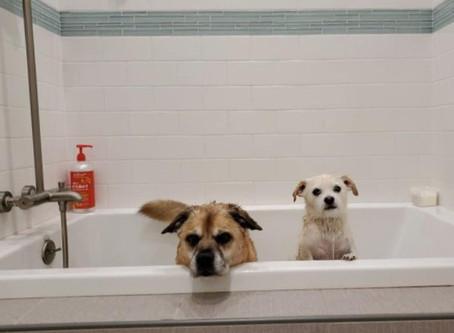 I Don't Like It...The Bath