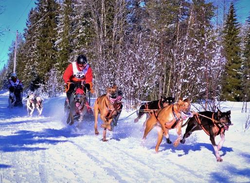 IFSS European Championship Snow Asarna 2020 Dag 2