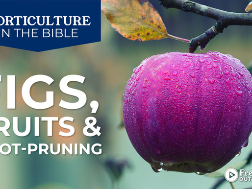 Horticulture in The Bible: Figs, Fruits, and Root-Pruning
