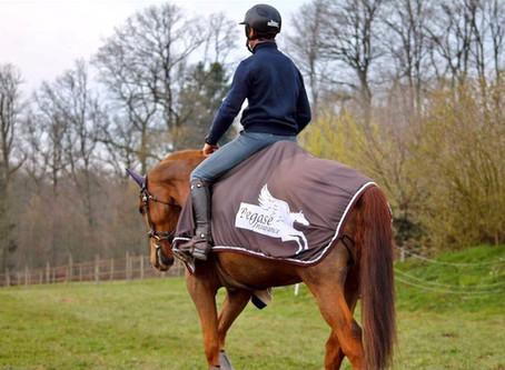 A quoi penser pour bien assurer votre cheval de sport ?