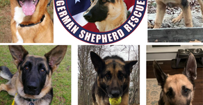 German Shepherd lovers, here's a group you won't want to miss!