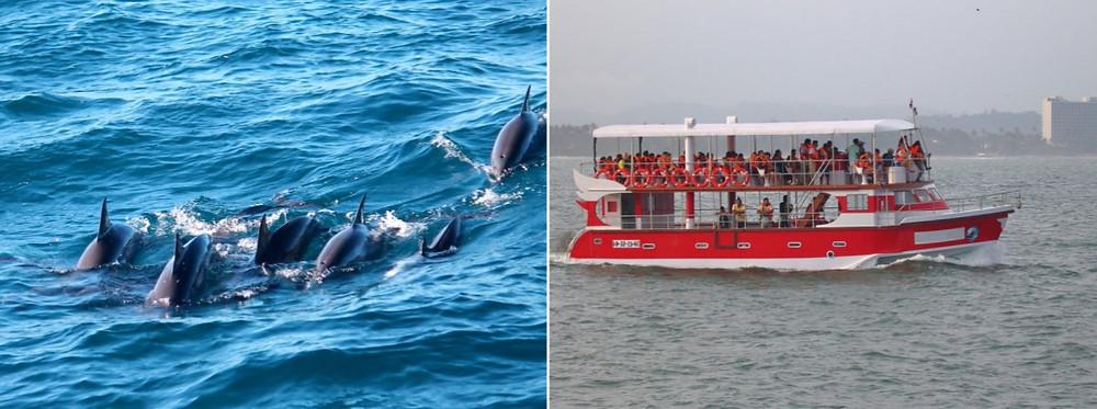 baleines et dauphins mirissa sri lanka