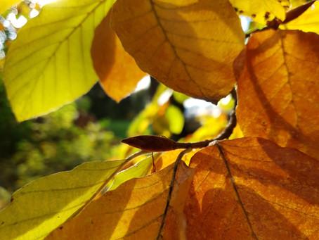 Der Herbst in der TCM – die Wandlungsphase Metall