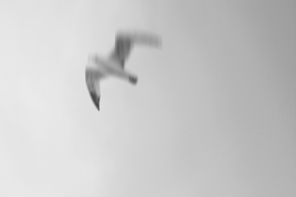 Seagull photo 50mm