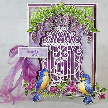 Elegant Songbirds