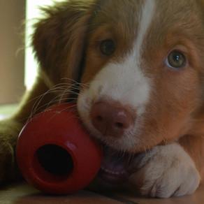 Problem Puppy Behaviour