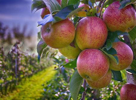 Сад своими руками. Плодовые деревья и кустарники для родового поместья.