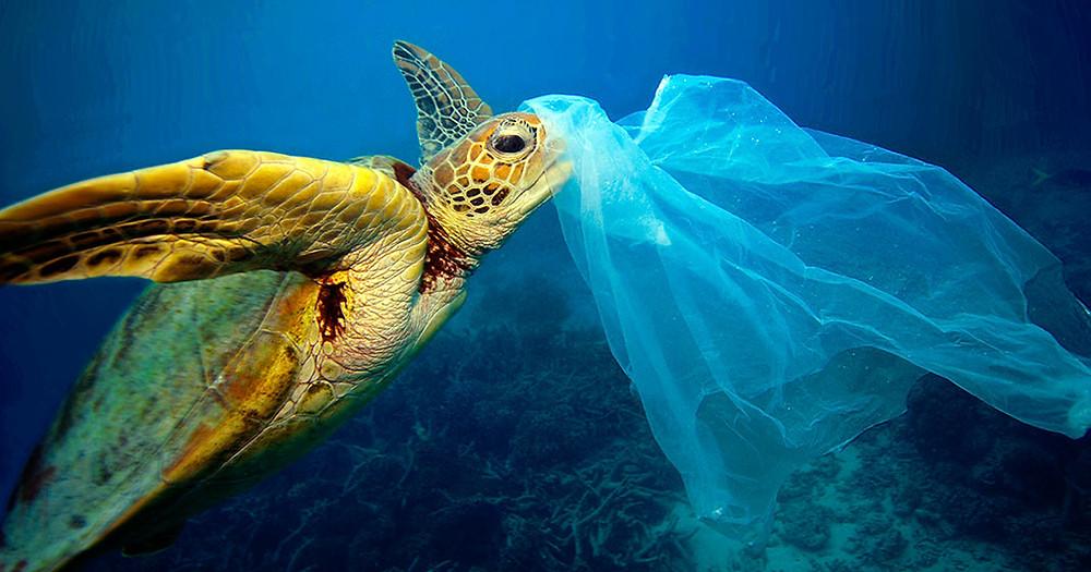 Tortue s'étouffant avec sac plastique