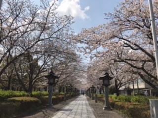桜の季節part3