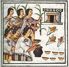 Let's Taco 'bout: MAIS - Das Grundnahrungsmittel