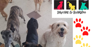 Do you hear that? It's pets having a blast at PetSound Daycare and Boarding!