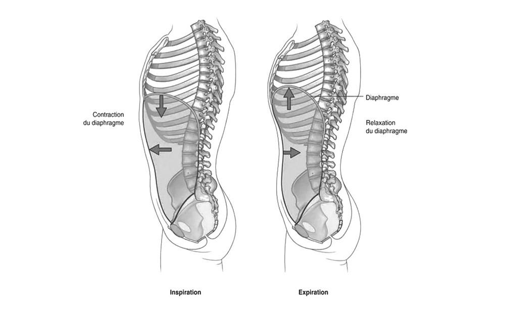 L'ostéopathie viscérale, pour les maux de ventre, les règles douloureuses, les troubles digestifs.