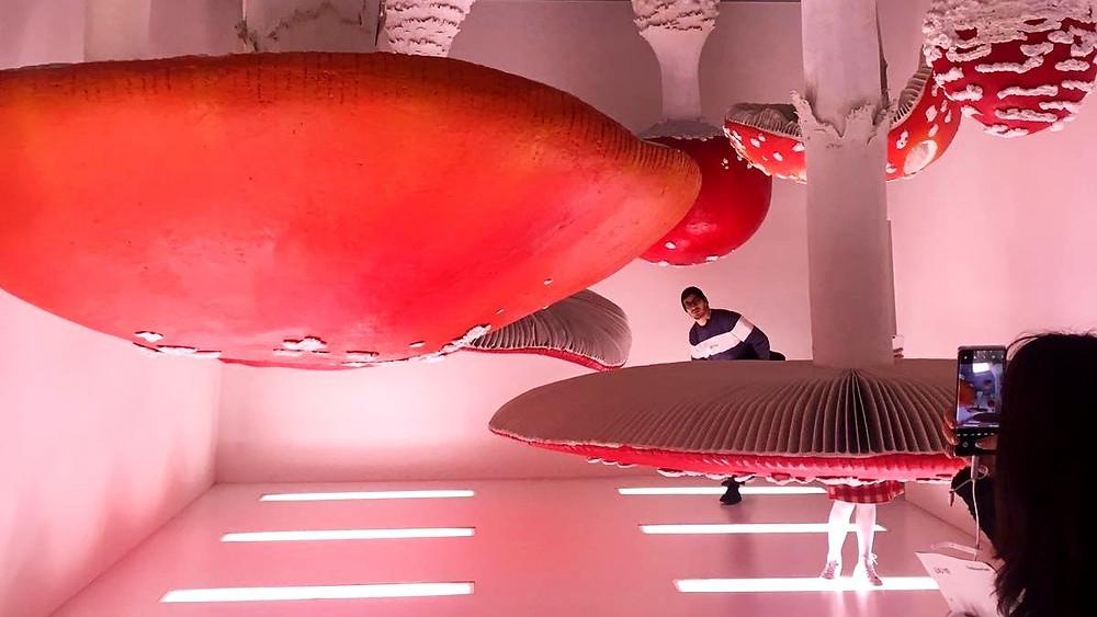 Installation by Carsten Höller