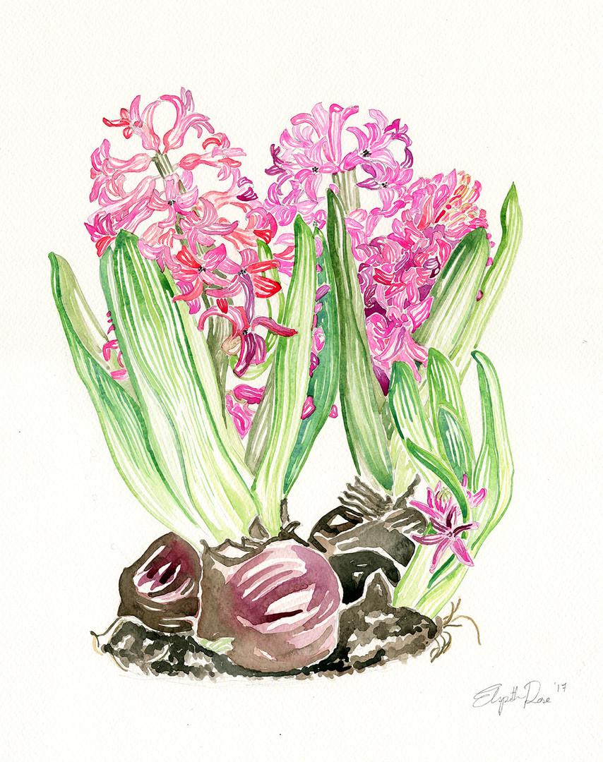 Pink Buld - Elspeth.jpg