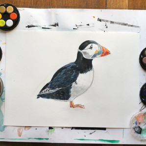 Watercolour Puffin