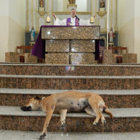 A Kind Priest Brings Stray Dogs to Sunday Mass so Families Can Adopt Them
