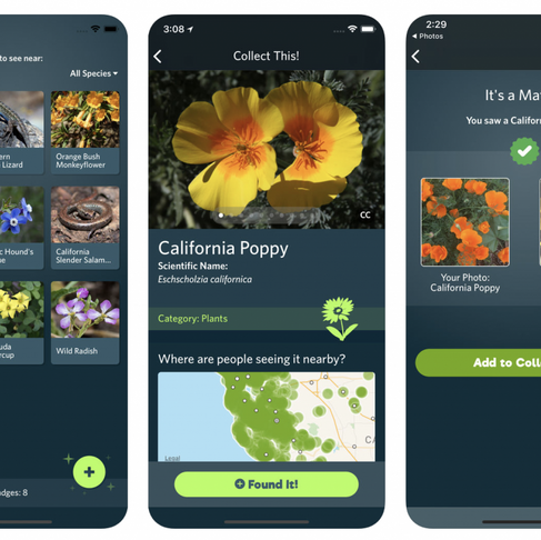 """New App Is the """"Shazam"""" for Nature"""