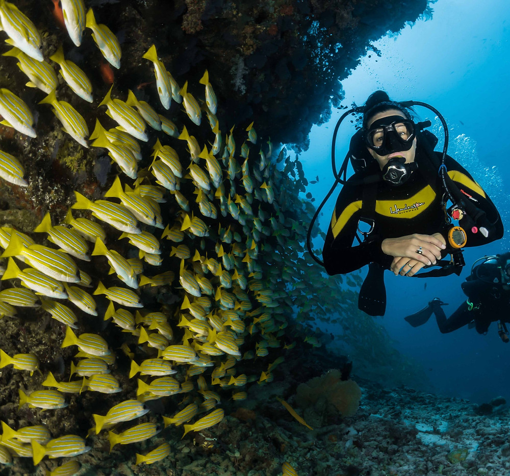 Scuba diving with yellow fish