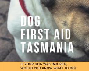Dog First Aid Workshops 2020