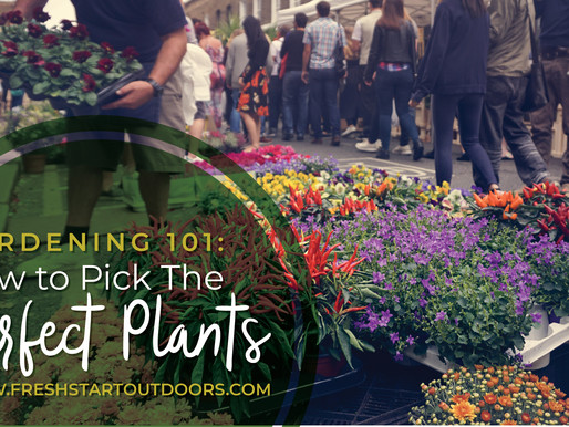 Gardening 101: How to Pick The Perfect Plants