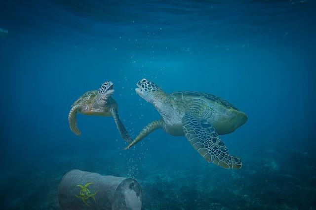 Tartarughe marine e inquinamento