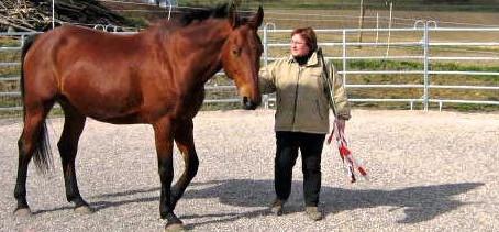 Souveränität von Pferden lernen
