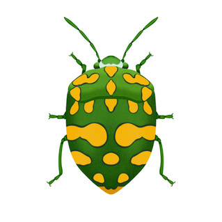 Physic Nut Stink Bug (Green)