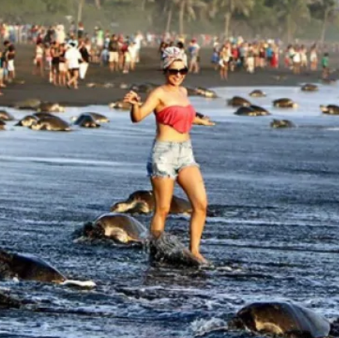 Silly Humans Get in the Way of Sea Turtles Laying Eggs