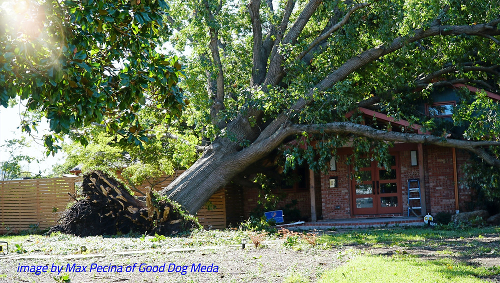 uprooted tree, red brick home, roots