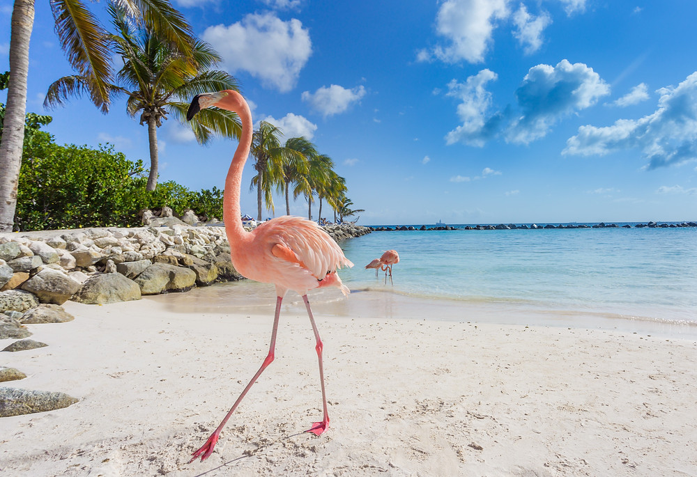 The best reasons to visit Aruba