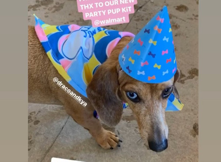 Kya the Pawty Pup !                                           Packed Party Accessories Ruff Ruff !!!