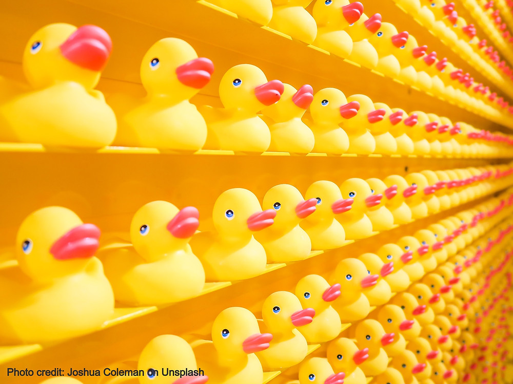 rows and rows of yellow rubber ducks