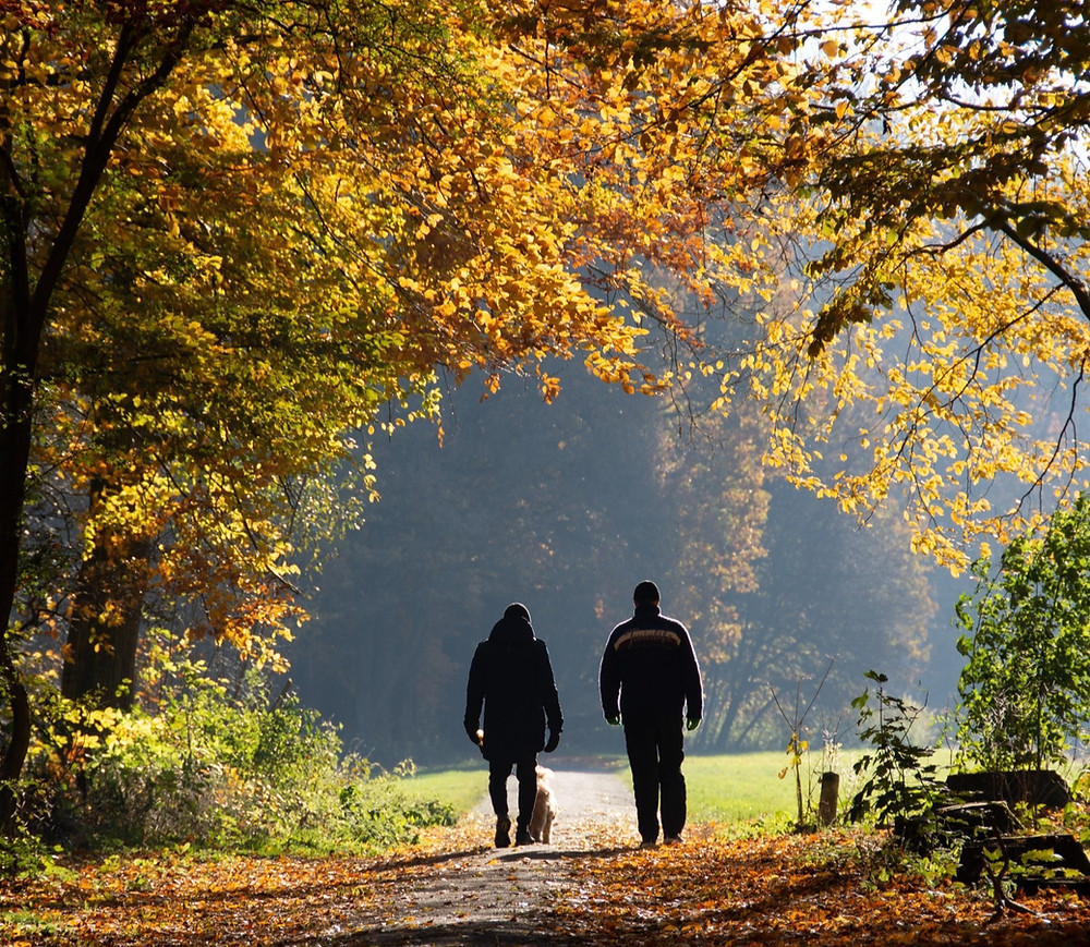 Father and son walking the dog in park during Autumn: The Parents' Guide to