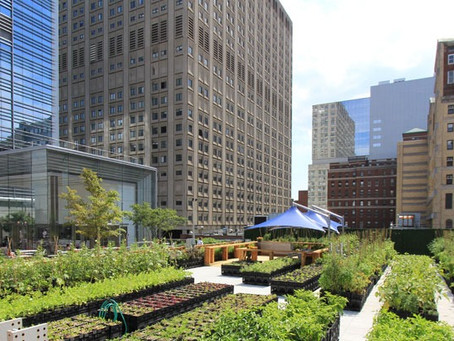 Is Urban Farming Really a Thing?  New Study Shows Substantial Economic and Climate Benefits