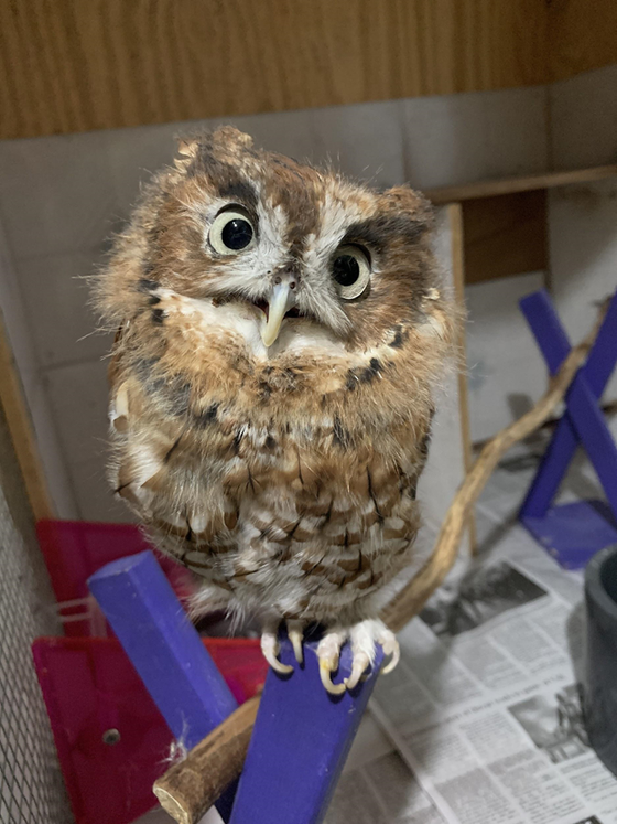 Extra, Extra, Read OWL About It