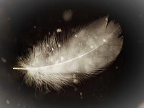 Lyrics - Feathers and Oil