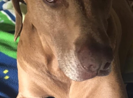 HBD Yogi Dog