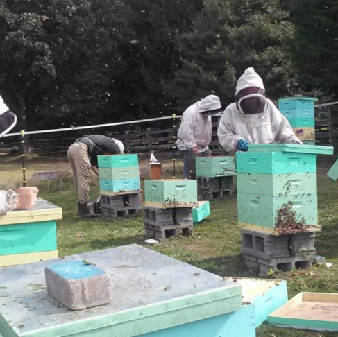 Out-Of-Work Appalachian Coal Miners Retrained As Beekeepers