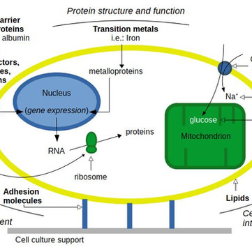Primer: FBS in cell-based meat R&D