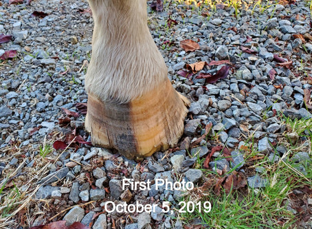 My Horses Hoof Transformation! (Equi-Fit Testimonial)